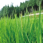 時期に応じてソムリエが選ぶ最高の米。